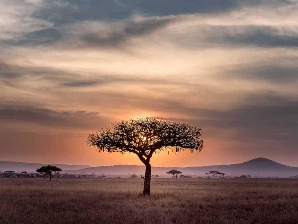 partir en vacances au kenya