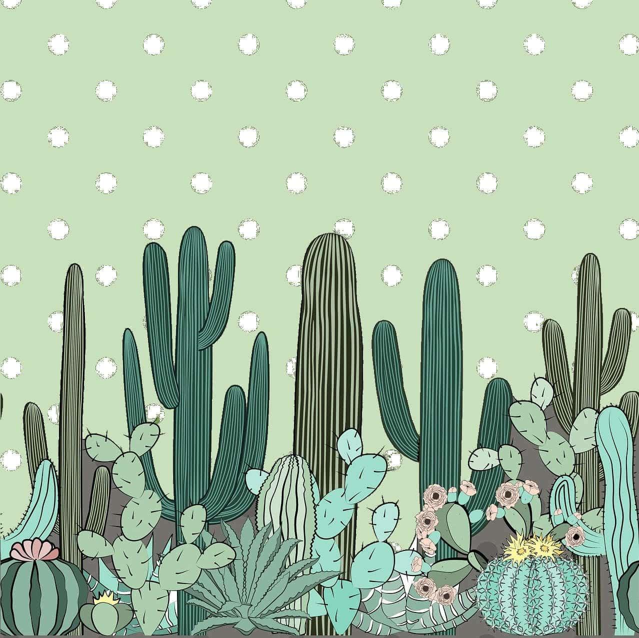 cactus-entretien